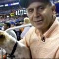 Dog Day at Shea Stadium – New York, NY