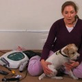 Animal Prolotherapy