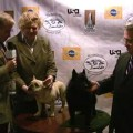 Boomer and Sega Show at Westminster Kennel Club Dog Show – New York, NY