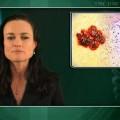 Pegylation does not improve tolerability of interferon alpha-2b for melanoma