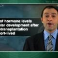 Heterotopic ovarian tissue transplantation may restore fertility after cancer treatment