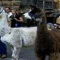 St. John the Divine – Blessing of the Animals – New York, NY