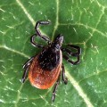 Lyme is Second Most Reported Disease in New England