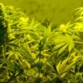Gupta Reverses Medical Marijuana Stance, Apologizes