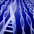 Scientists Identify Gene Responsible for Handedness
