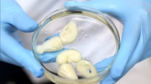 Chinese Researchers 3D Print Living Kidneys