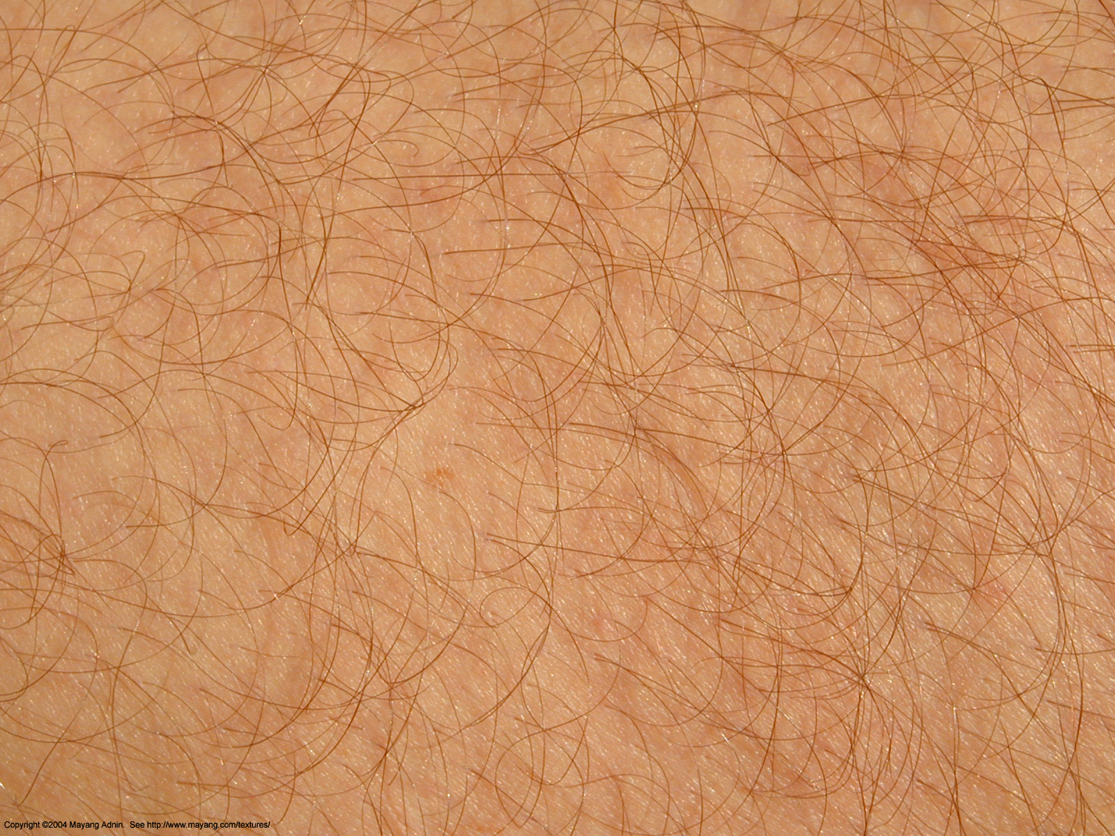 Scientists Identify New Method For Hair Growth The