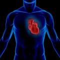 Scientists Develop Biodegradable 'Superglue' for Cardiac Repairs
