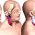 Surprising Findings from the First Ever Review of Face Transplant Surgery