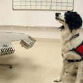 Man's Best Friend Demonstrates Cancer-Detecting Abilities