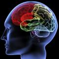 GPS System for Brain Wins Nobel Prize in Medicine