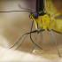 Butterfly's Proboscis Inspires Nano Tube Medical Device Engineering