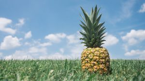 Wound-Healing Properties of Pineapples Harnessed by Brazilian Researchers