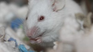 Dopamine Shrinks Cancer Tumors in Mice