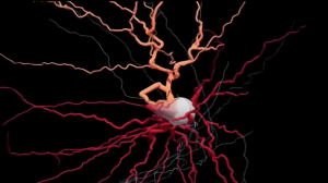 New Type of Brain Cell May Provide Insight into Mechanism of Human Consciousness