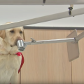 Can Canines Identify Malaria-Infected Humans Before Symptom Onset?